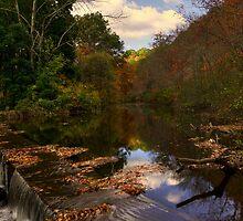 Calm Waters by Sharon Batdorf