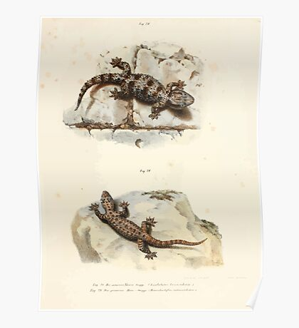 Leopold Joseph Fitzinger 1867 0051 Picture Atlas for popular scientific natural history of vertebrates Poster