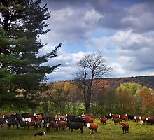 """""""Til The Cows Come Home"""" by Don  Powers"""