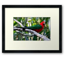 Australian King Parrot Framed Print