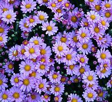 Lavender Flora by Ori Kaydar