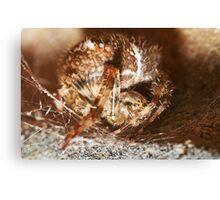 Spider Macro Canvas Print