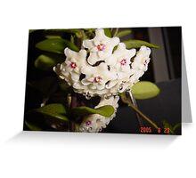 Hoya cv 'Mathilde' Greeting Card