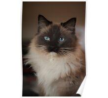Sully Monster cat  Poster