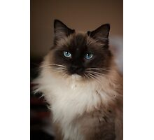 Sully Monster cat  Photographic Print