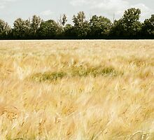 Wheat Field by PatiDesigns