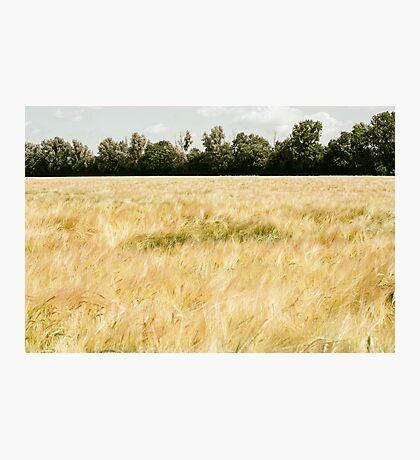 Wheat Field Photographic Print