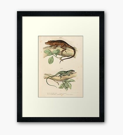 Leopold Joseph Fitzinger 1867 0037 Picture Atlas for popular scientific natural history of vertebrates Framed Print