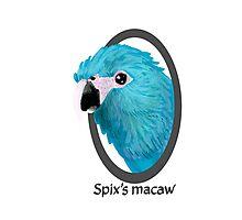 Spix's macaw Photographic Print
