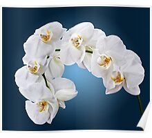 Orchid - 4 Poster