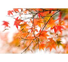 Autumn's coloured canvas Photographic Print