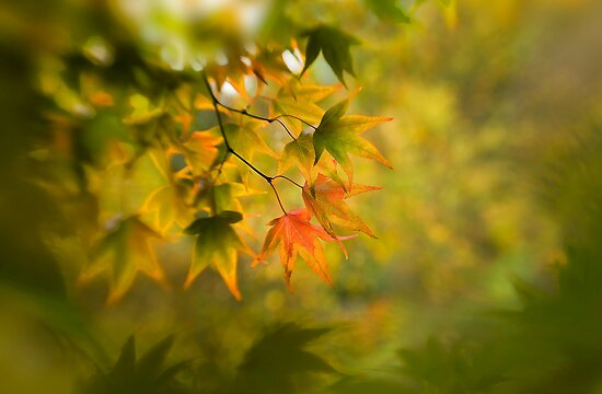 Autumn's soft glow by Jacky Parker