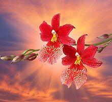 Orchid - 7 by Mikhail Palinchak