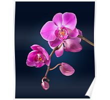 Orchid - 9 Poster