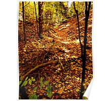 Leaf Canyon Poster