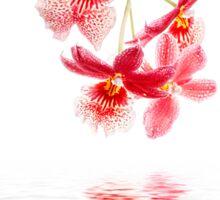 Orchid - 10 Sticker
