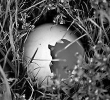 Empty Nest by jodik75