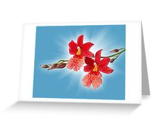 Orchid - 11 Greeting Card