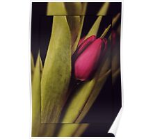 Tulips Series II Poster