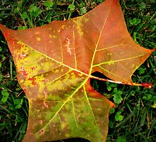 The Many Textures Found On A Leaf by Linda Miller Gesualdo