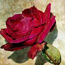 Belated Rose by Valentina Walker