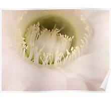 Heart of a Cactus Flower Poster
