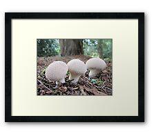 Puffball Fungi Framed Print