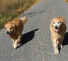 Enjoying Their Walk! by AliceMc