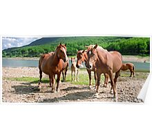 Protecting the Foal Poster