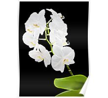 Orchid - 18 Poster