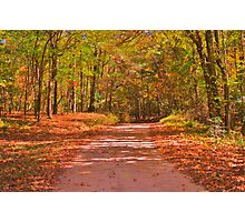 Dirt, Trees & Leaves Photographic Print