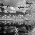 Reflections at Summer Leys, IR by David W. Harris