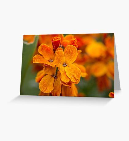 Macro Orange Flowers Greeting Card
