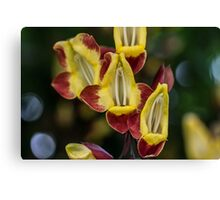 Macro Red and Yellow Flowers Canvas Print
