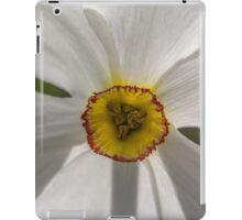 Macro white daffodil iPad Case/Skin