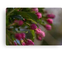 Pink Blossom Buds Canvas Print