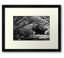 The Energy Of An Old Tree Framed Print