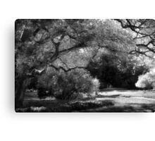 The Energy Of An Old Tree Canvas Print