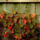 Fence Decoration ©  by Dawn M. Becker