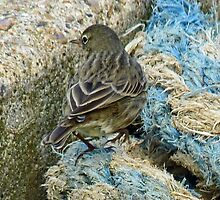 Small Harbour Bird On Old Frayed  Rope by lynn carter