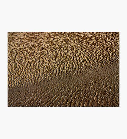 portmeirion's beach Photographic Print