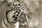 TIGER IV by Debbie Ashe
