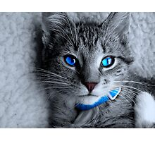 Old blue eyes Photographic Print