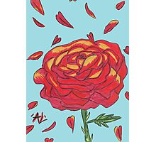 Rose Aside Falling Petals Photographic Print