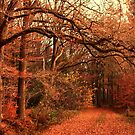 November Forest by ienemien
