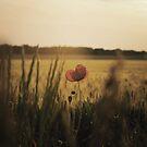 Wandering : Flower by Jeremy  Barré