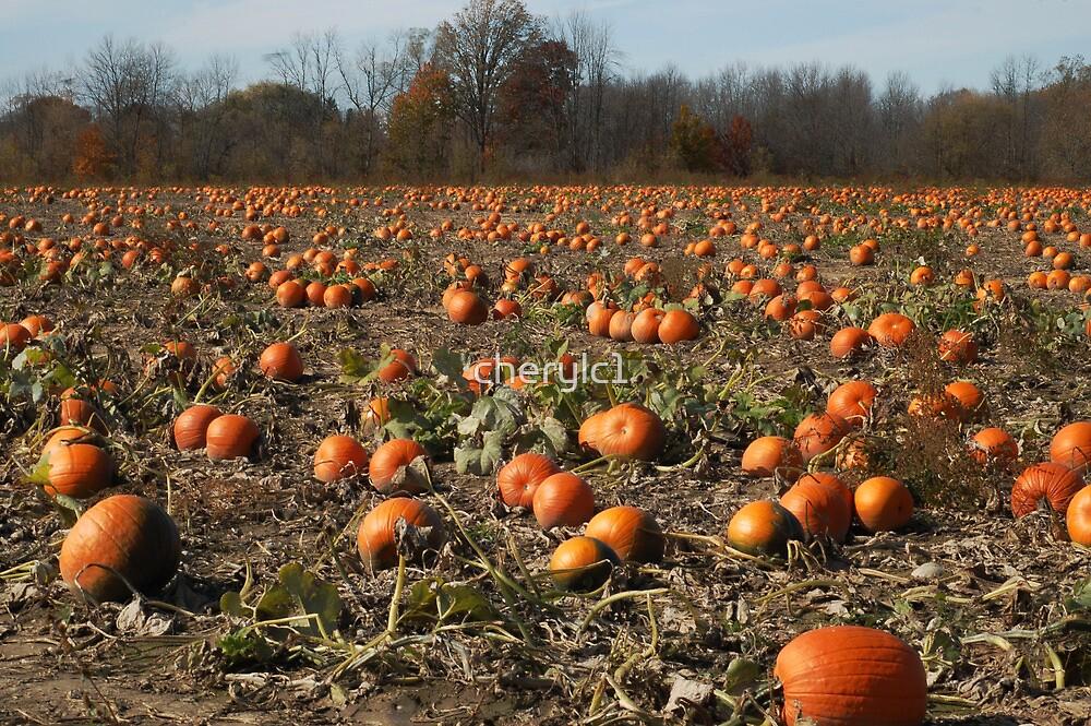 The pumpkin patch by cherylc1