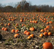 The pumpkin patch by cherylc1
