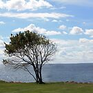THE OLD TREE AND THE SEA by Esperanza Gallego