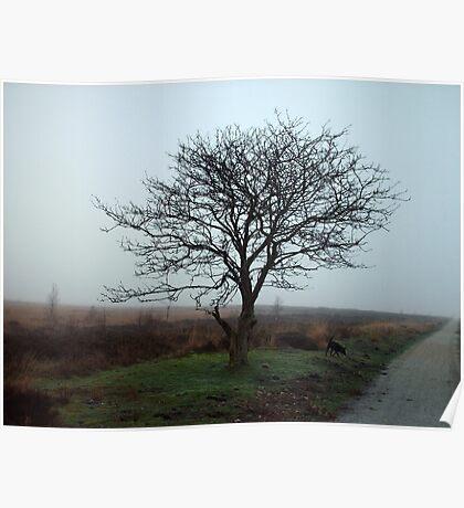 Fall Tree Fochteloerveen Poster